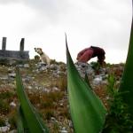 WILD THING en el Cerro Quemado
